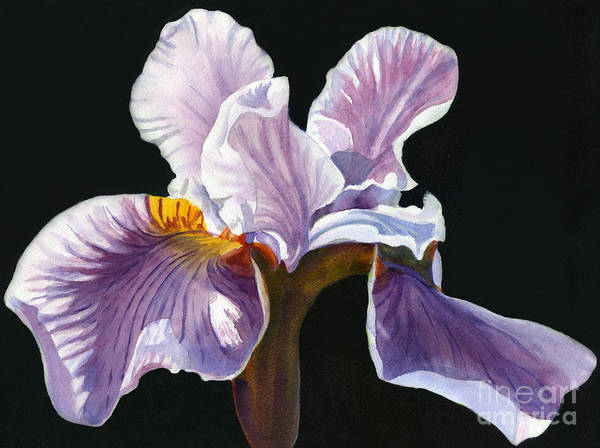 Lavender Irises Poster featuring the painting Lavender Iris On Black by Sharon Freeman