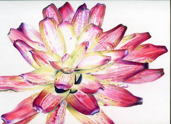 Bromeliad Poster featuring the painting Neoregelia Picasso by Penrith Goff