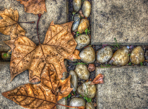 Autumn Poster featuring the photograph Autumn Texture by Wayne Sherriff