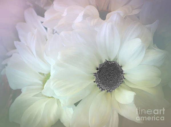 Photography Poster featuring the photograph Gerbera Softness    by Kaye Menner