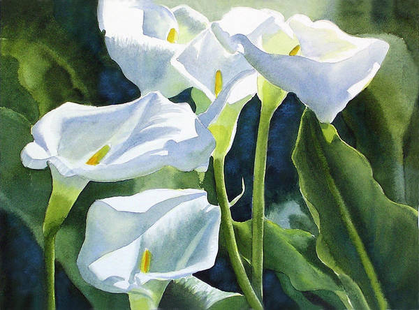 White Poster featuring the painting White Calla Lilies by Sharon Freeman