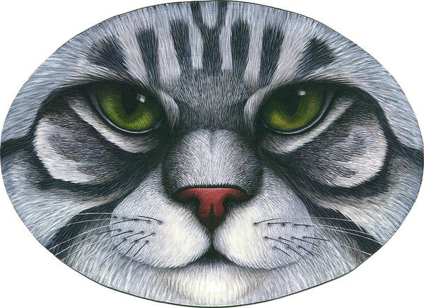 Gray Tabby Cat Poster featuring the painting Cat Oval Face by Carol Wilson