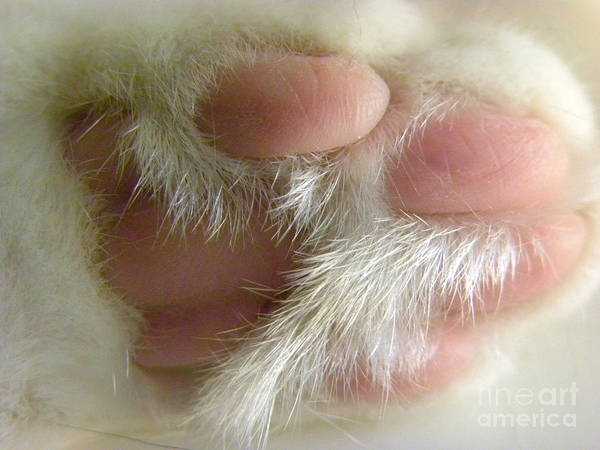 Paw Poster featuring the photograph Awwwww Paw by Laura Yamada