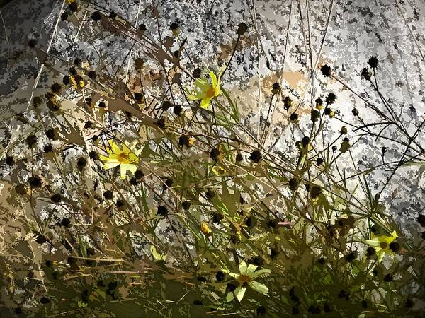 Black-eyed Susan Poster featuring the digital art Black-eyed Susan On Rocks by Patricia Keith