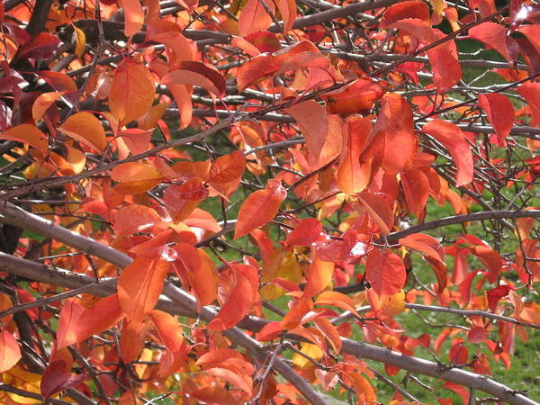 Fall Poster featuring the photograph Crabapple by Kimberly Maxwell Grantier
