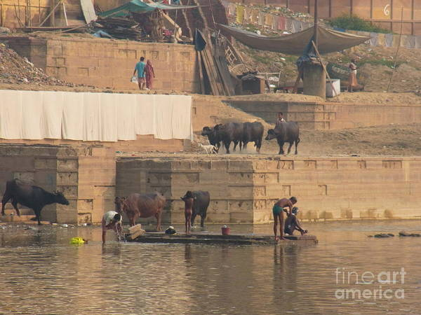 India Poster featuring the photograph Everyday Life At Kashi by Agnieszka Ledwon