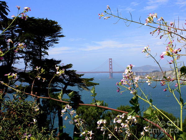 San Francisco Poster featuring the photograph Golden Gate Bridge And Wildflowers by Carol Groenen