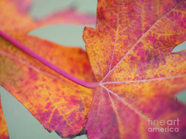 Leaf Abstract Poster featuring the photograph Leaf Abstract In Pink by Irina Wardas