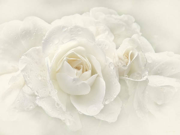 Rose Poster featuring the photograph Wedding Day White Roses by Jennie Marie Schell