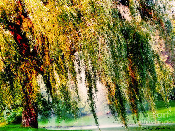 Weeping Willow Tree Poster featuring the photograph Weeping Willow Tree Painterly Monet Impressionist Dreams by Carol F Austin
