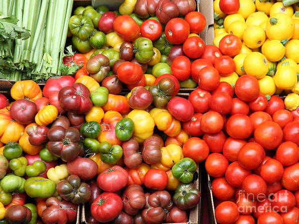Tomato Poster featuring the photograph A Variety Of Fresh Tomatoes And Celeries - 5d17901 by Wingsdomain Art and Photography