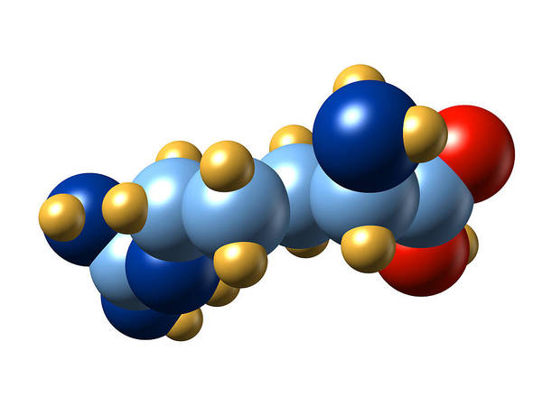 Arginine Poster featuring the photograph Arginine, Molecular Model by Dr Mark J. Winter