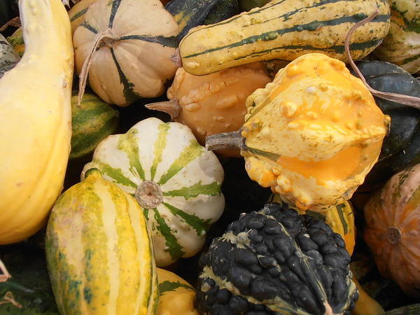 Gourds Poster featuring the photograph Gourds by Kimberly Perry
