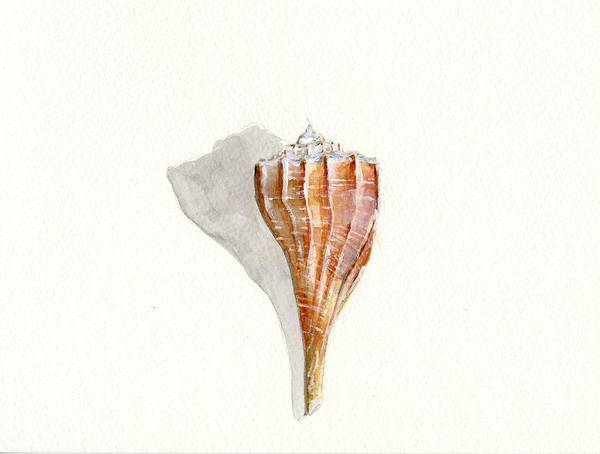 Sea Shell Poster featuring the painting Sea Shell Watercolor by Sheryl Heatherly Hawkins