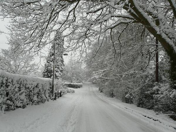 Christmas Cards Poster featuring the photograph Sugar Road II by Rdr Creative