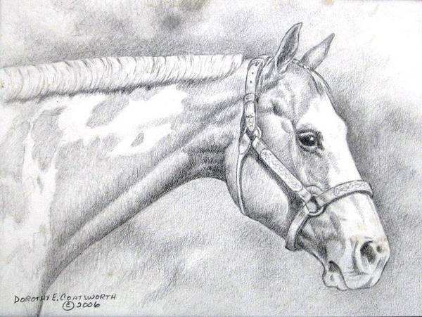 Poster featuring the drawing Paint Horse by Dorothy Coatsworth