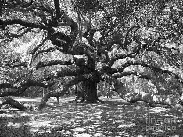 Black And White Poster featuring the photograph Angel Oak Tree Black And White by Melanie Snipes