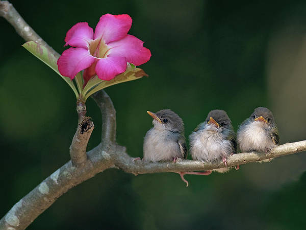 Horizontal Poster featuring the photograph Cute Small Birds by Photowork by Sijanto
