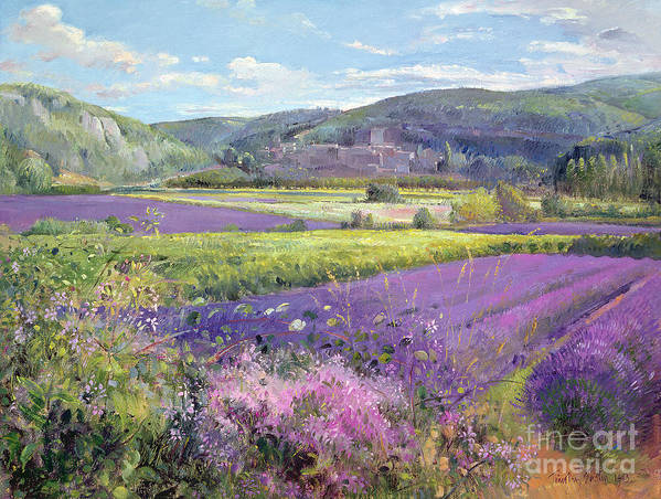Field; South Of France; French Landscape; Hills; Hill; Landscape; Flower; Flowers; Field; Tree; Trees; Bush; Bushes; France; Provence Poster featuring the painting Lavender Fields In Old Provence by Timothy Easton