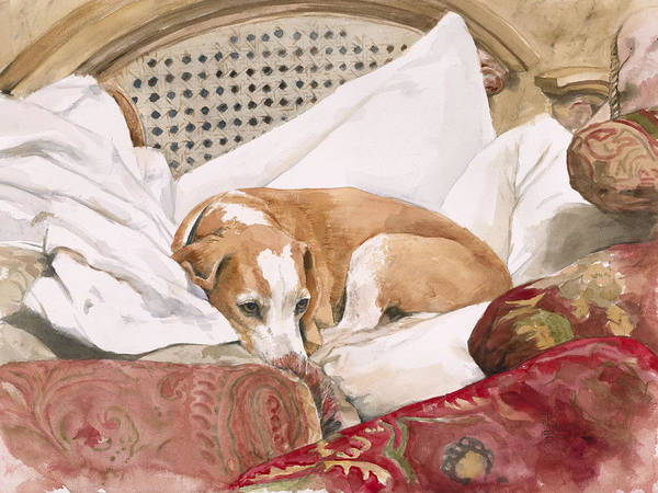 Dog Poster featuring the painting Regal Beagle by Debra Jones