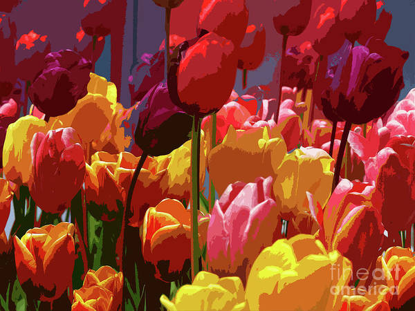 Tulips Poster featuring the photograph Tulip Confusion by Sharon Talson