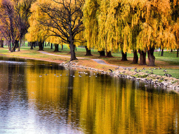 Autumn Poster featuring the photograph Yellow Autumn by Scott Hovind