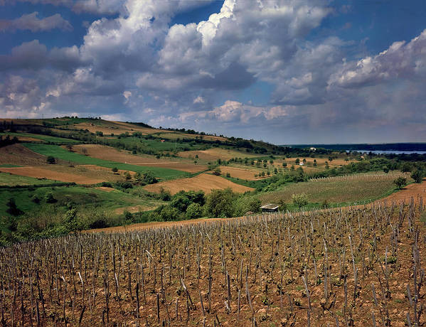 Vineyard In Serbia Poster featuring the photograph Vineyard In Frushka Gora. Serbia by Juan Carlos Ferro Duque