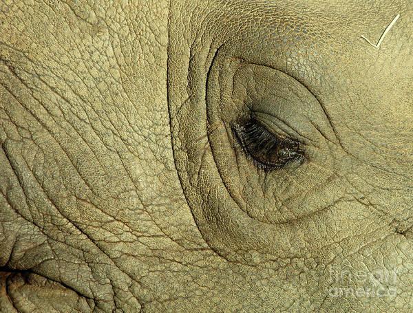 Rhinoceros Poster featuring the photograph Rhino Eye by Marc Bittan