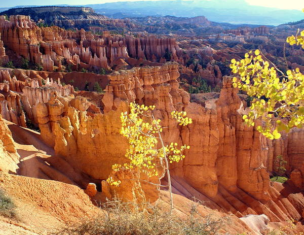 Bryce Canyon National Park Poster featuring the photograph Fall In Bryce Canyon by Marty Koch