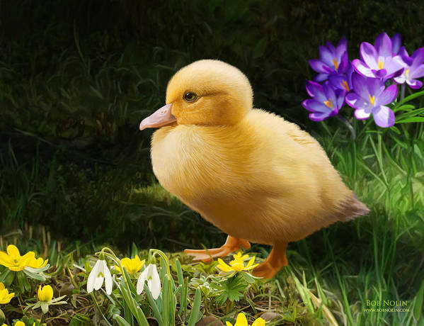 Duckling Poster featuring the digital art Just Ducky by Bob Nolin