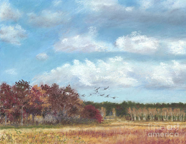 Sandhill Cranes Poster featuring the painting Sandhill Cranes At Crex With Birch by Jymme Golden