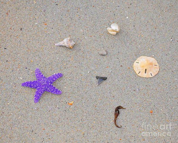 Sea Star Poster featuring the photograph Sea Swag - Purple by Al Powell Photography USA