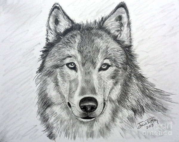 Wolf Poster featuring the drawing Wolf by Julie Brugh Riffey