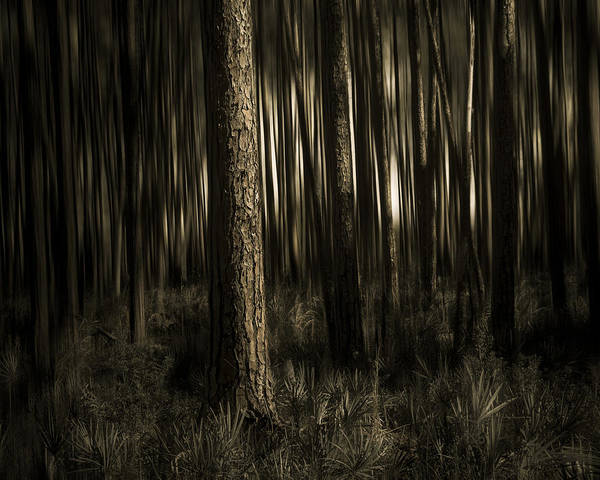 Sepia Poster featuring the photograph Woods by Mario Celzner