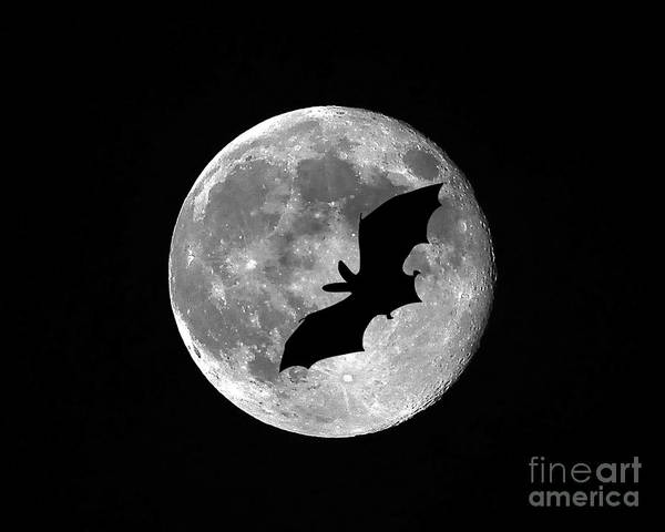 Moon Poster featuring the photograph Bat Moon by Al Powell Photography USA