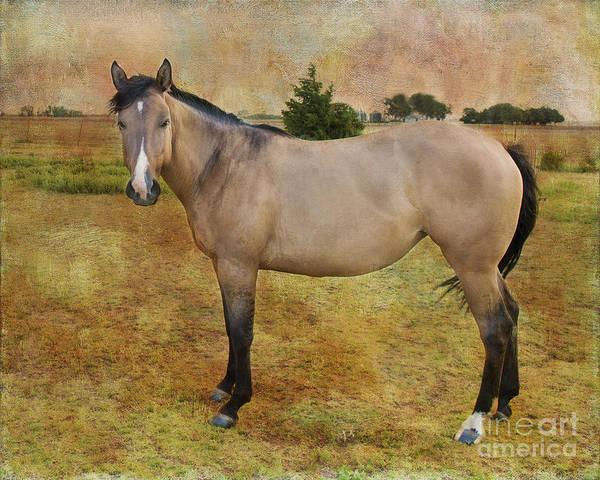 Horse Poster featuring the photograph Beautiful Buckskin by Betty LaRue