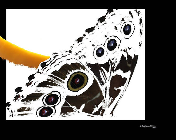 Butterfly Poster featuring the digital art Butterfly Dream by Xoanxo Cespon