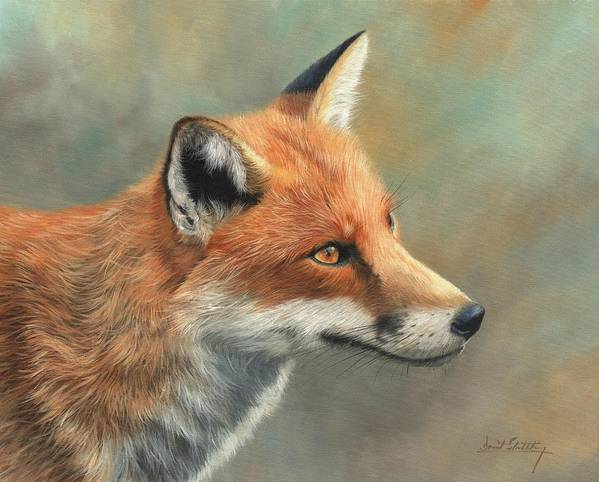 Fox Poster featuring the painting Red Fox Portrait by David Stribbling