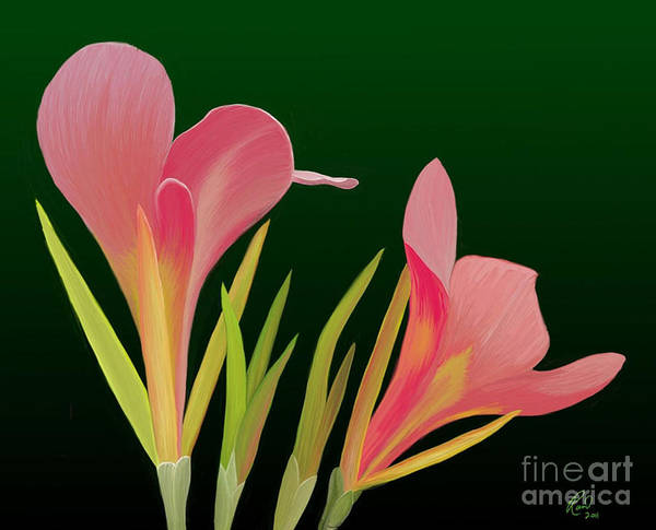 Flowers Poster featuring the painting Canna Lilly Whimsy by Rand Herron