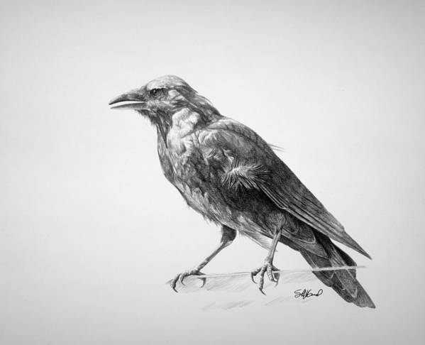 Crow Poster featuring the drawing Crow Drawing by Steve Goad