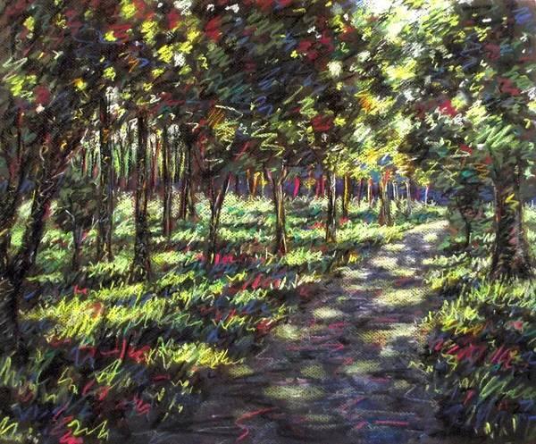 Landscape Poster featuring the pastel Sunlit Trees by John Nolan