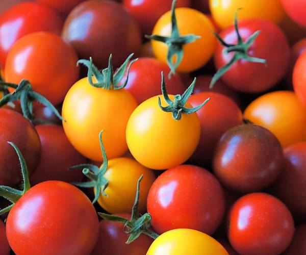 Tomato Poster featuring the photograph Homegrown by Jenny Hudson