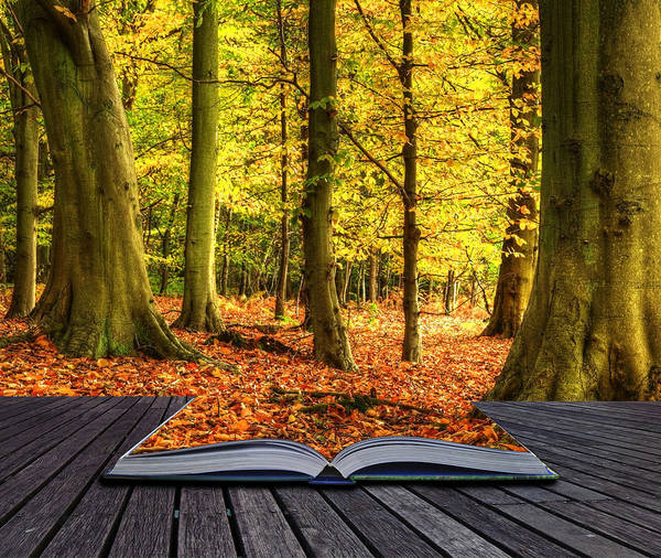 Magic Poster featuring the photograph Autumn Fall Forest Landscape Magic Book Pages by Matthew Gibson
