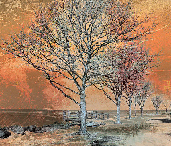 Winter Scene Poster featuring the photograph Winter's Dawn by Shawna Rowe