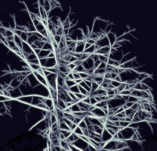 Abstract Poster featuring the photograph Fractal Ghost Tree by Steve Ohlsen