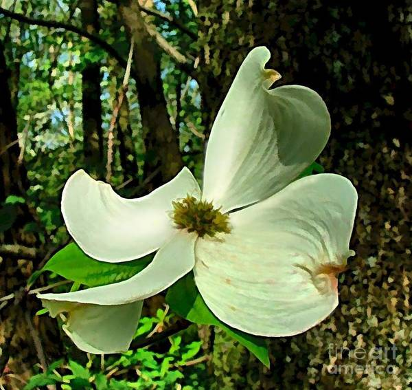 Dogwood Blossom Poster featuring the photograph Dogwood Blossom II by Julie Dant