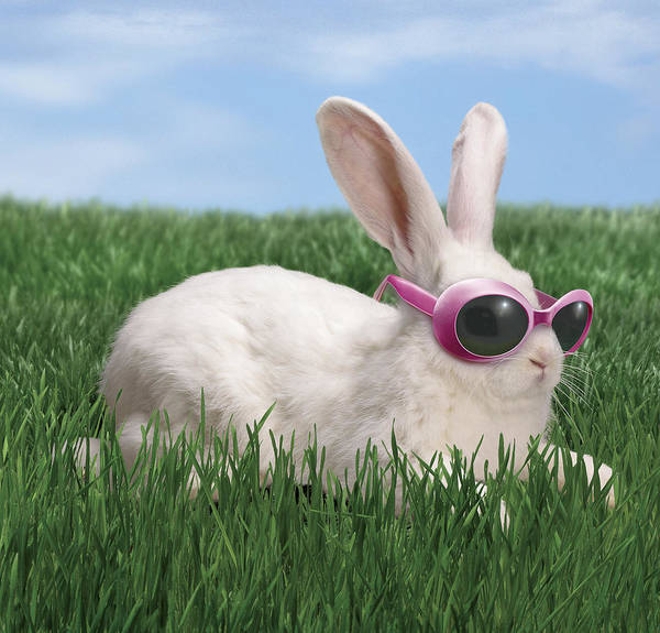 Horizontal Poster featuring the photograph Rabbit With Sunglasses by George Caswell