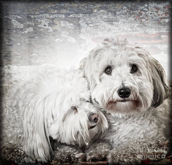 Dogs Poster featuring the photograph Together by Elena Elisseeva