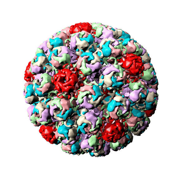 Simian Vacuolating Virus 40 Poster featuring the photograph Simian Virus 40 Particle by Laguna Design