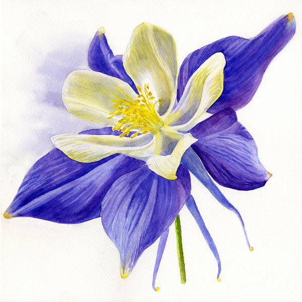 Blue Poster featuring the painting Single Blue Columbine by Sharon Freeman